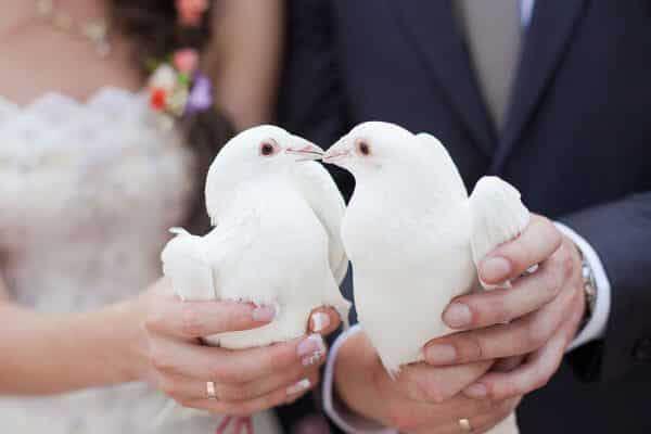Cairns Wedding Dove Release